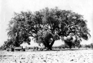 Historia de la trufa (Cataluña)
