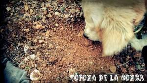 Trufiturismo con nuestros perros truferos