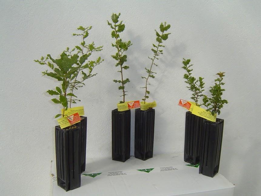 Plantas micorrizadas