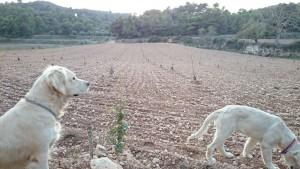 Proyectos de cultivo de trufa